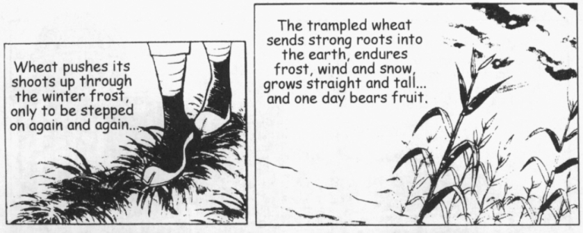 Trampled Wheat